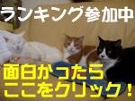 兄弟・姉妹猫ブログランキング