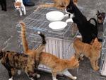 夜逃げした家に残された30匹以上の猫たち