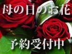母の日のお花予約受付中!