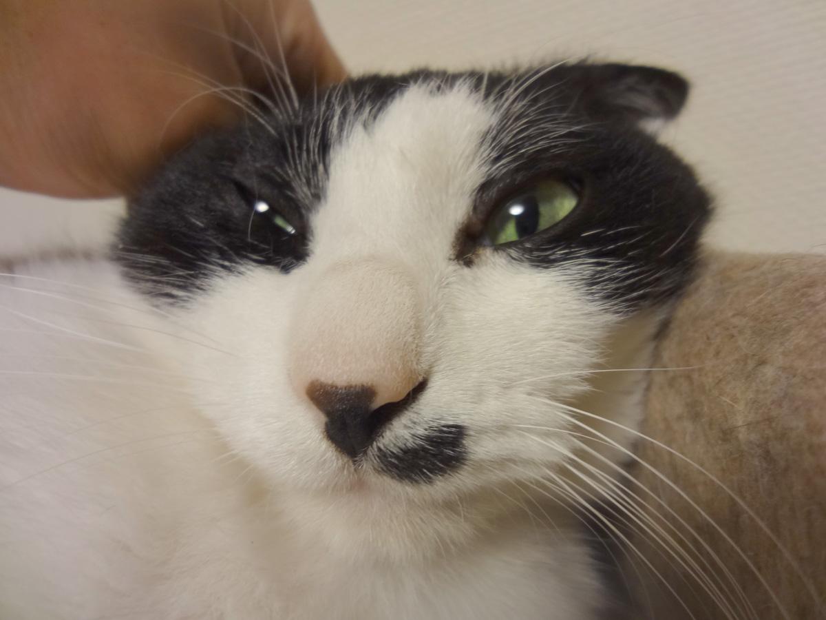 猫塾の画像 p1_13