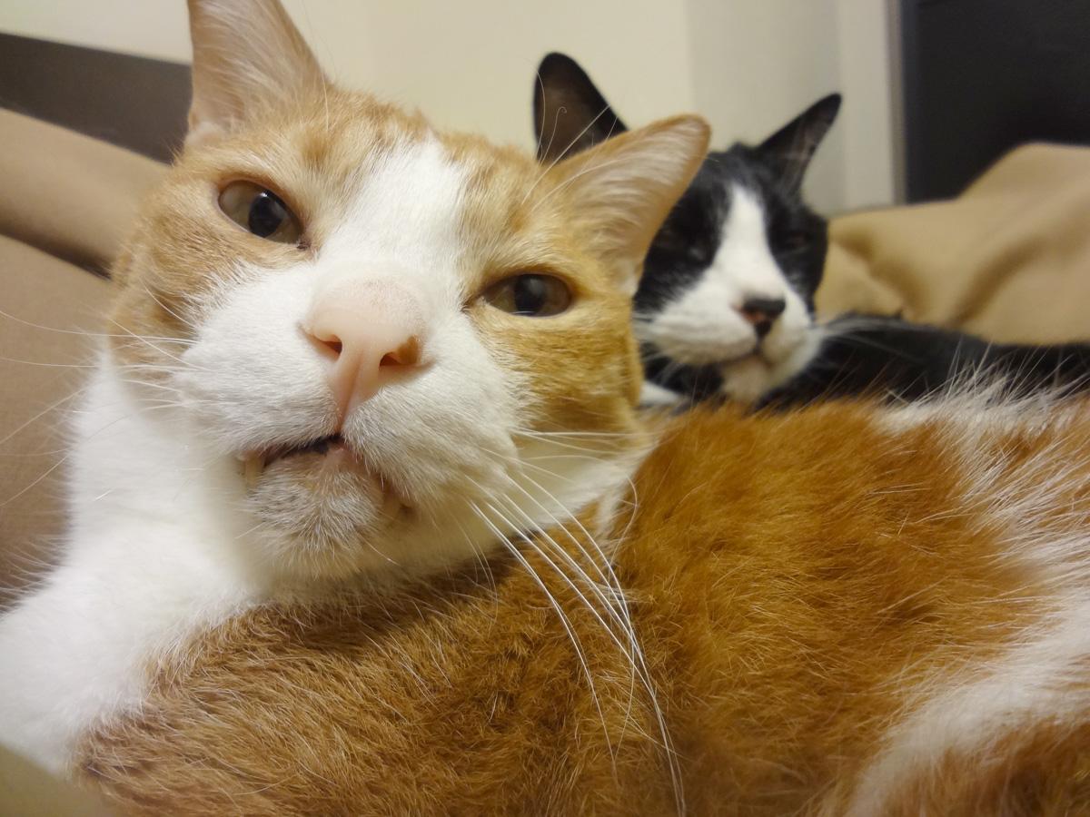 猫塾の画像 p1_29